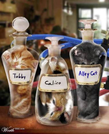 Bonsai Kitten Assortment: just in time for Christmas