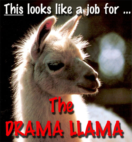 Drama Llama worked overtime today