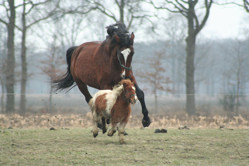 """That Pony has 4500 Facebook Friends and the horse is all """"who needs social media?"""""""